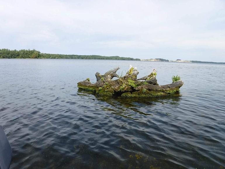 stump island in lake