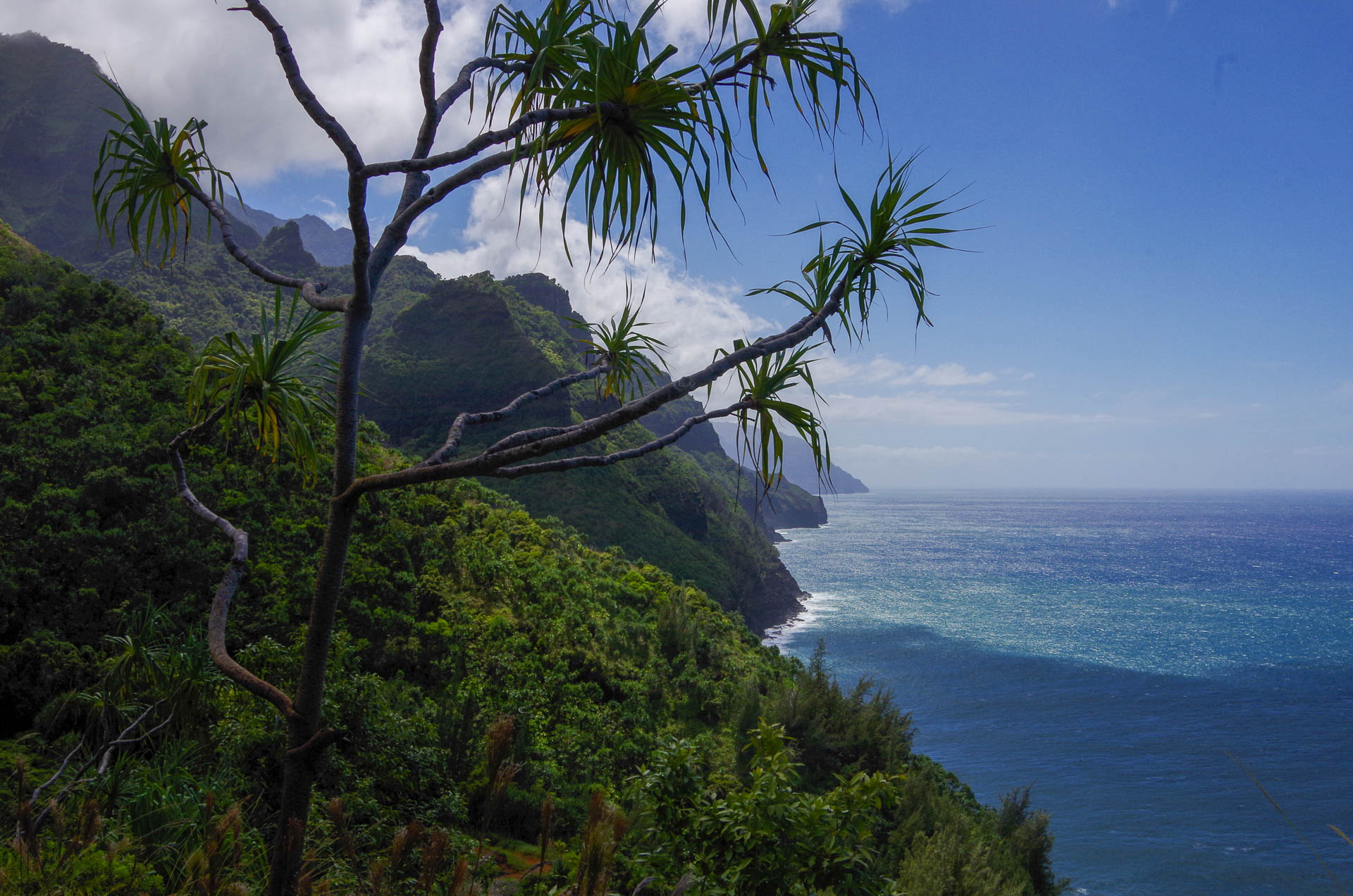 Na Pali coast through a tree