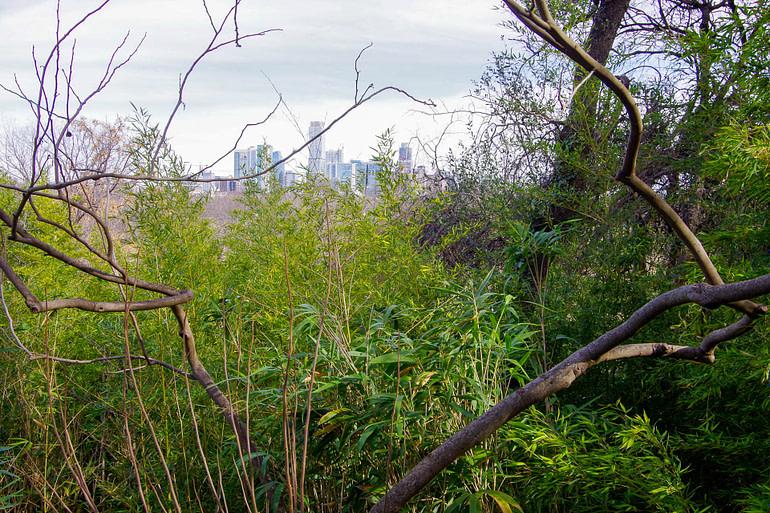 city skyline through trees