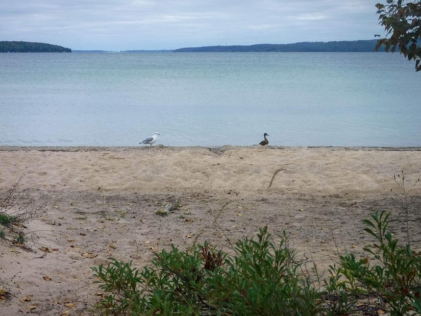 beach with birds
