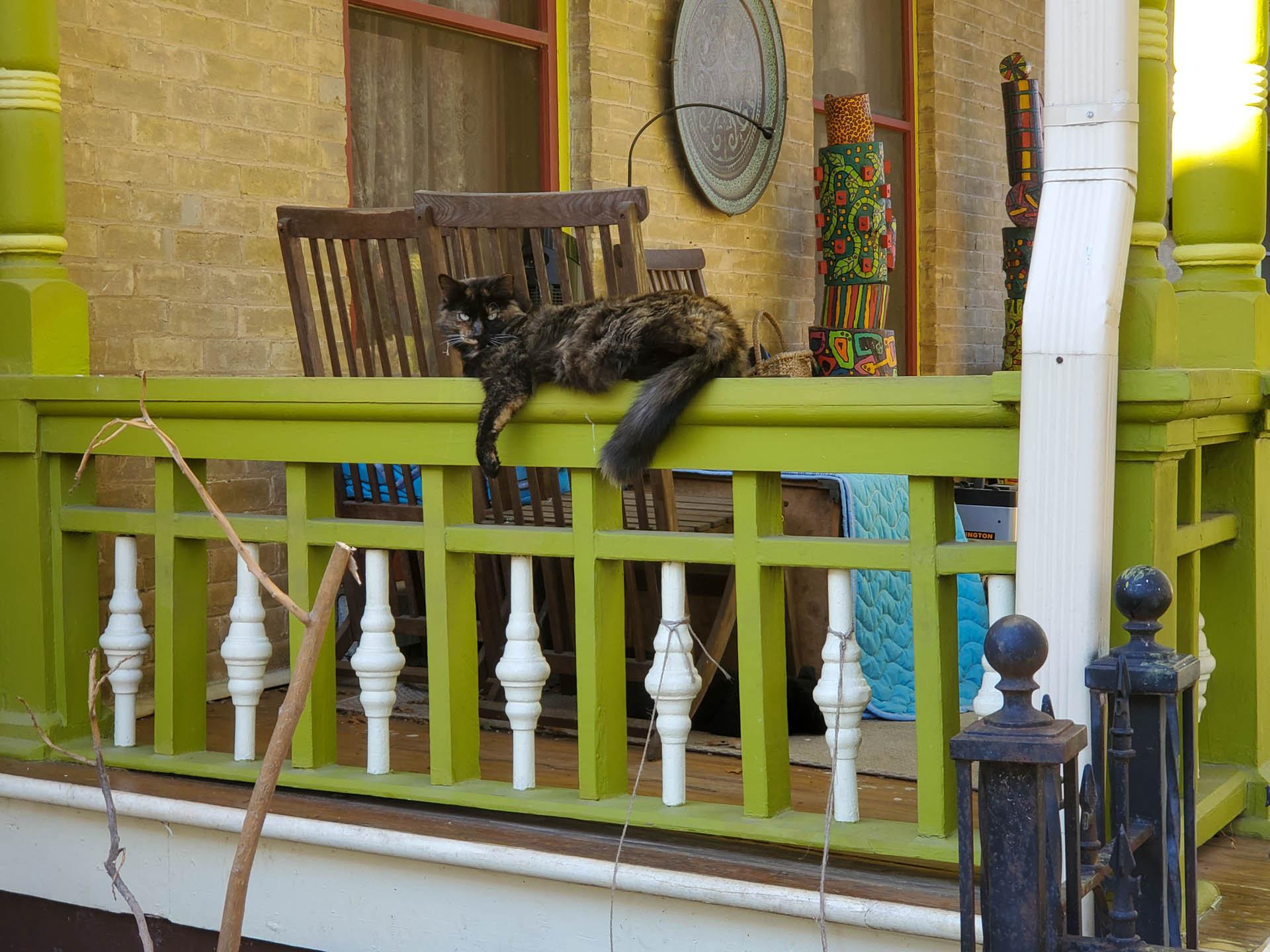 cat on porch railing