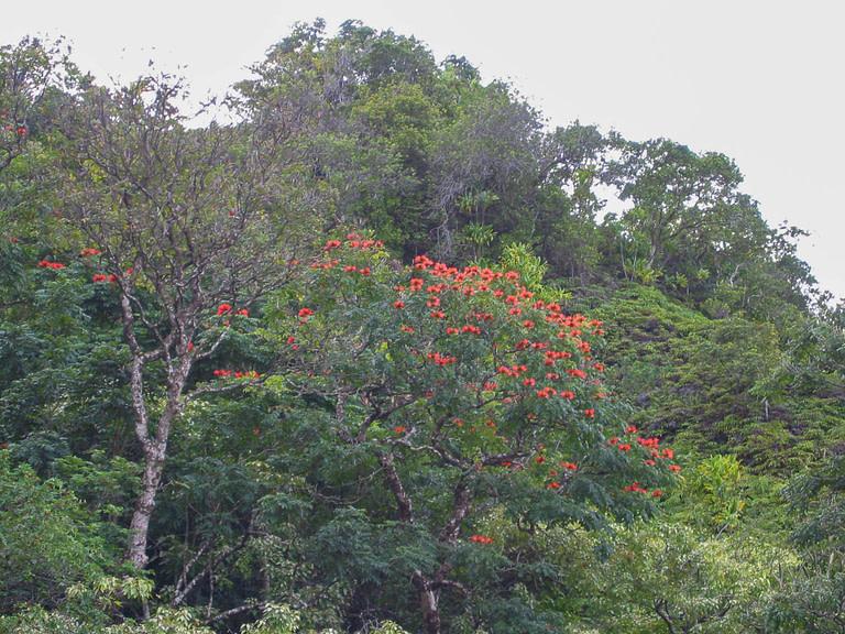 red flowering tree