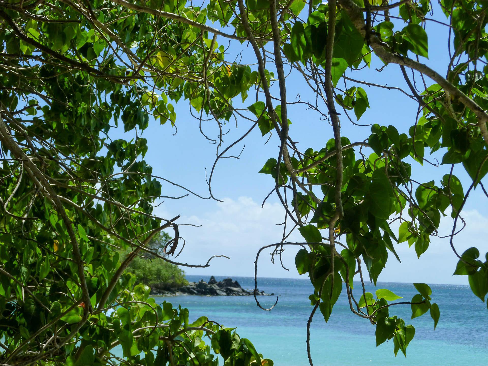 foliage and beach
