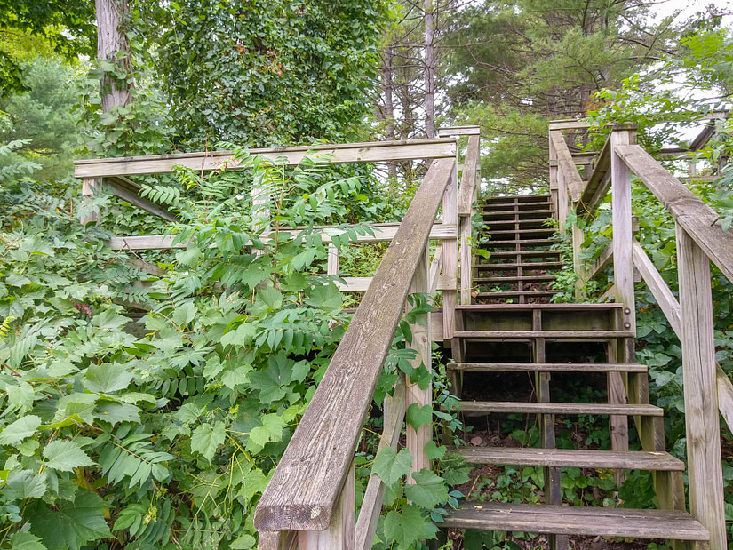 stairs with vines