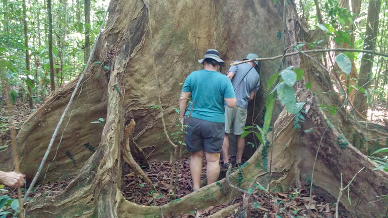 large tree buttress