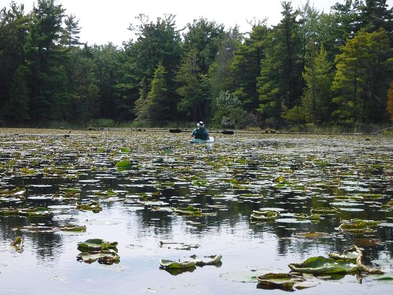 lily pads and kayak