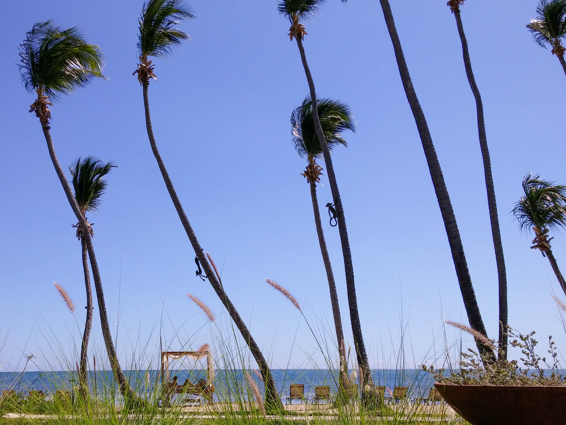 palms and grass by shore