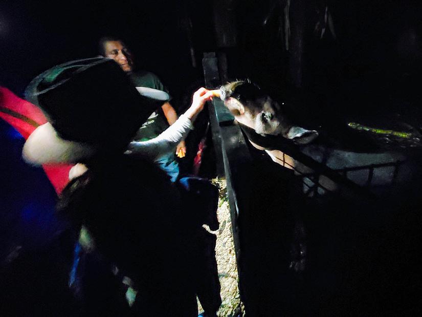 Feeding the tapir