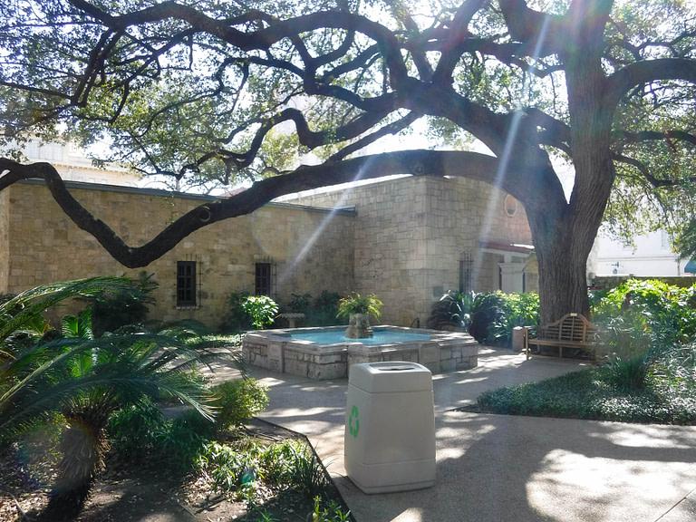 large live oak in courtyard