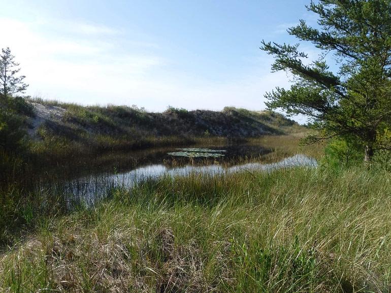 pond in dunes