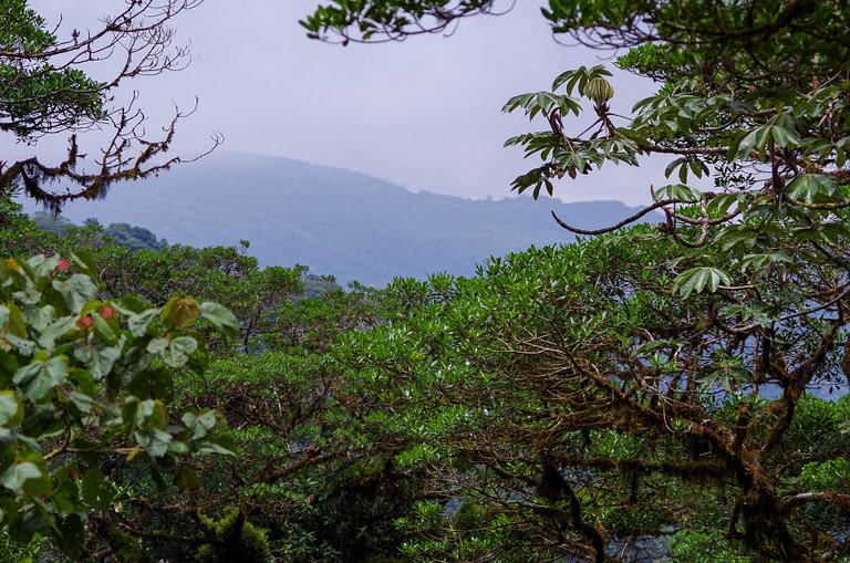 cloud forest with mountain