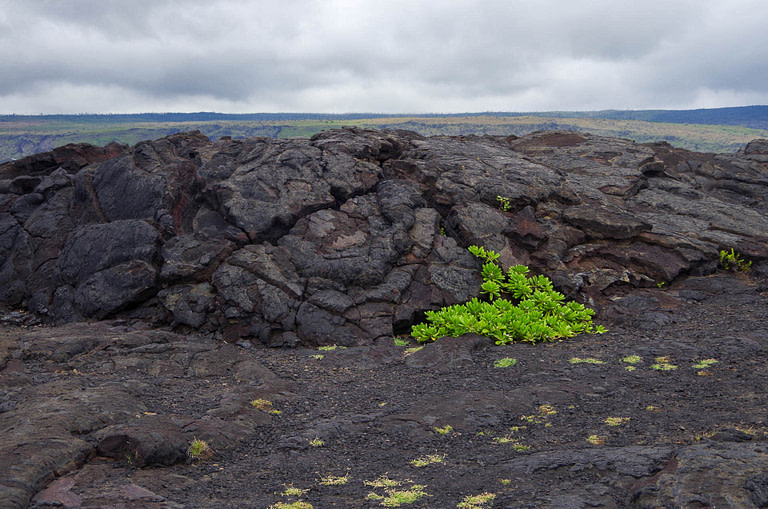 green plants against lava