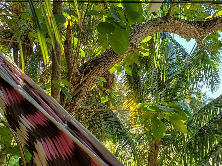Hiding iguana