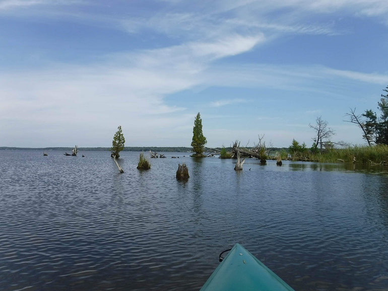 stump islands with trees
