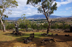 Kangaroos at Bonorong