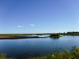 Tuttle Marsh