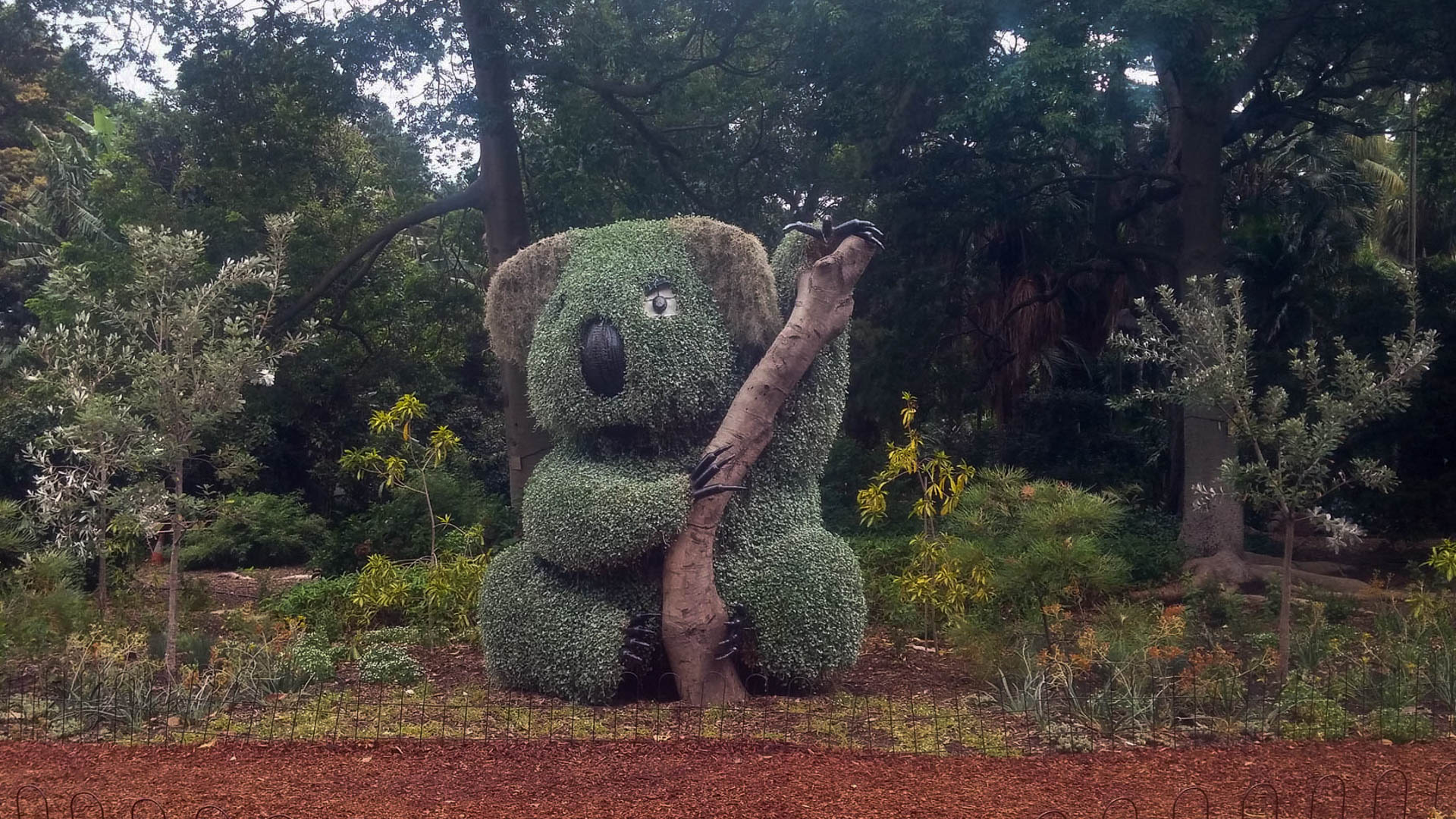 koala topiary